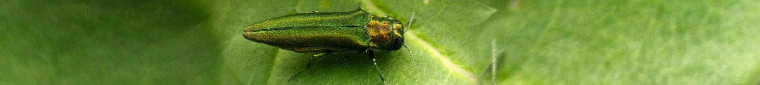 agrilles